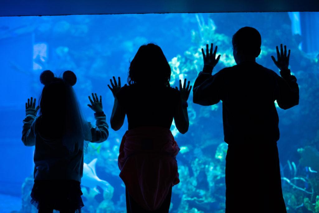 The Living Seas, Epcot Center